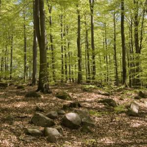 135-uggleskogen