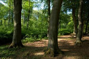 Väla skog - Foto: Per Blomberg/skånska bilder.