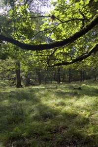 Hjorthagen - Foto: Per Blomberg