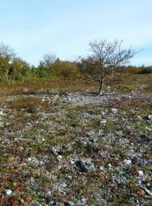 Naturen på Klagshamnsudden. Foto: Magnus Billqvist.