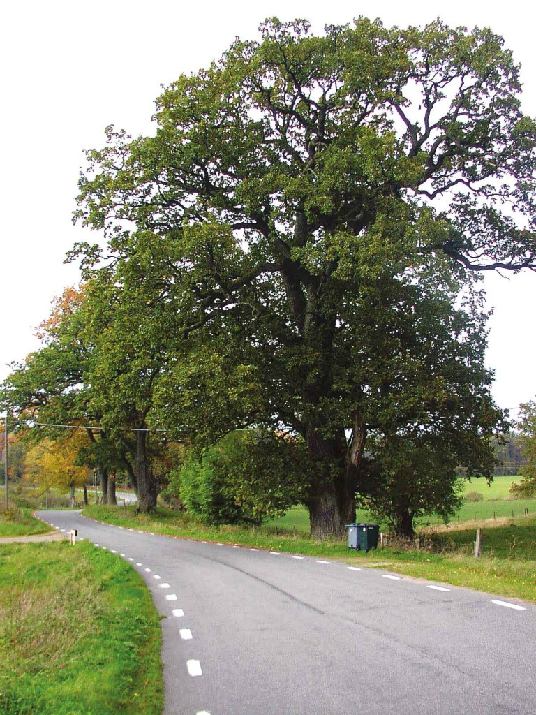 144-Magleekar-PB-2003