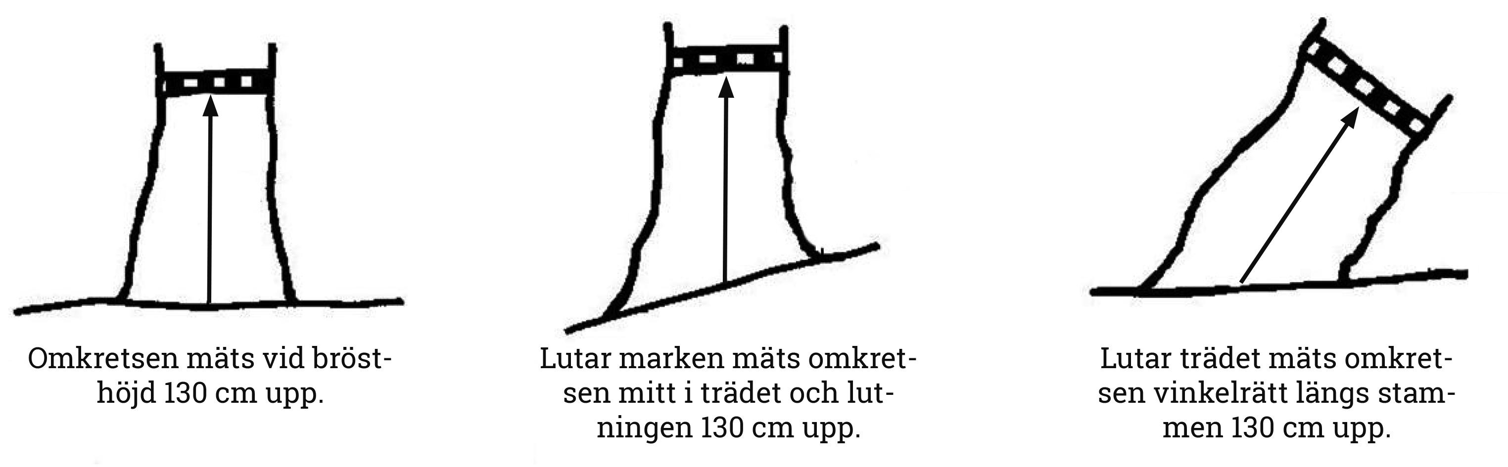 Hur mäter man ett träd? u2013 Naturskyddsföreningen Skåne