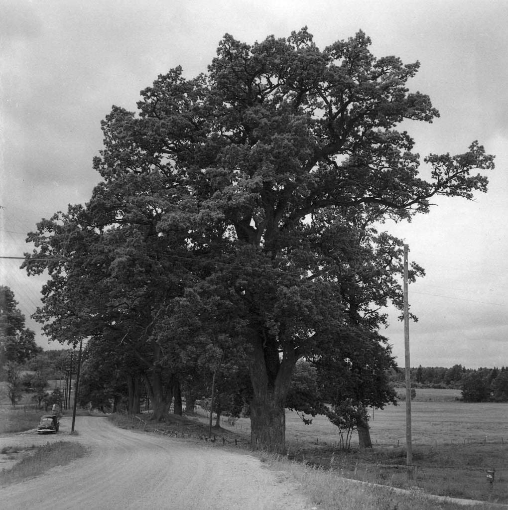 Maglo-gard-ek-646-1954-Weimarck