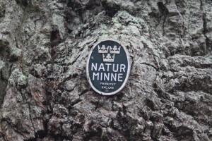Naturminne