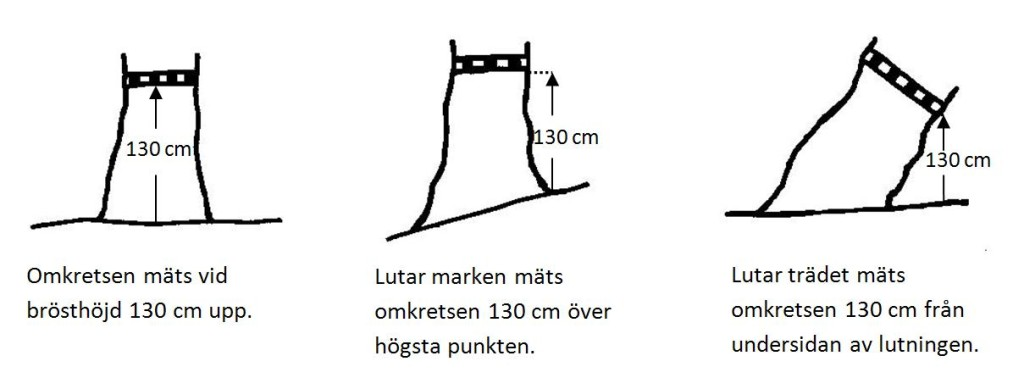 Träd_mätning