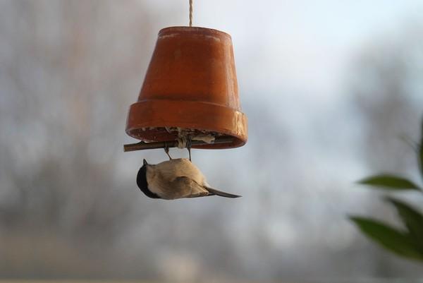 fågelmatare på pinne