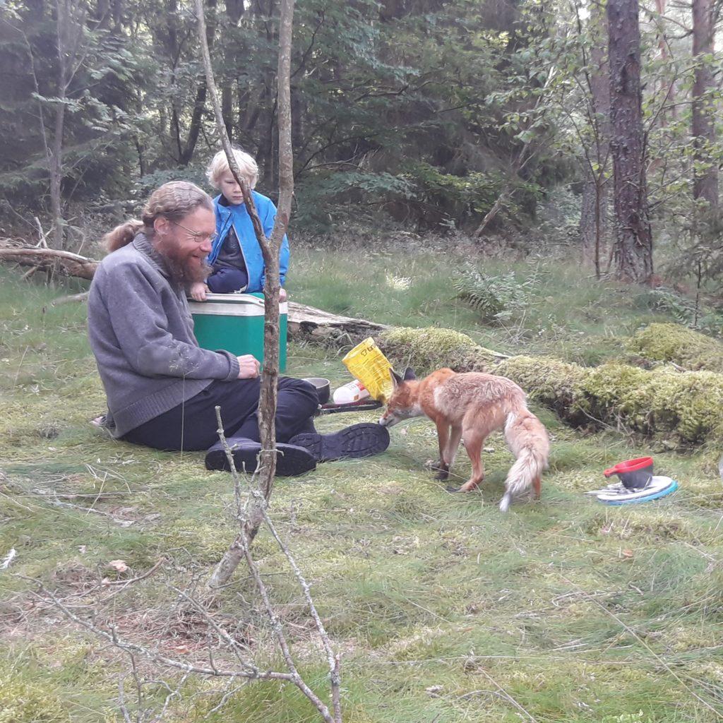 Nyfiken besökare vid stormköket. Bilden togs sekunden innan räven nappade åt sig den gula påsen med brännaren och tändstickorna i och sprang iväg.
