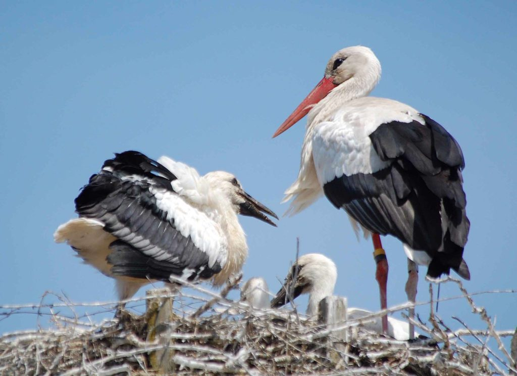 Storkens Vänner